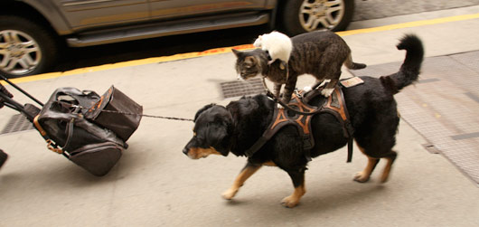 Historien om rottekatthunden rører nordmenn
